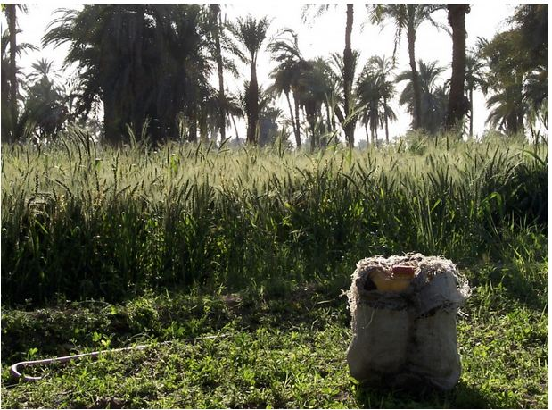 add 4 egypt agriculture