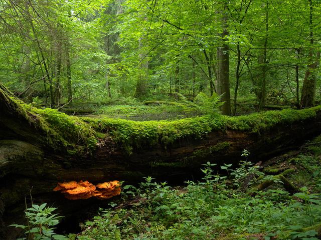 poland woods start