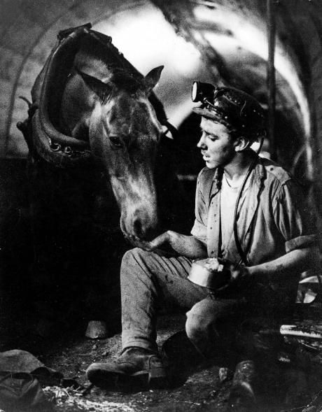 A young Welsh miner sitting in a mine, feeding a pit pony