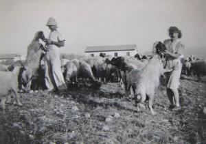 zeid kibbutz
